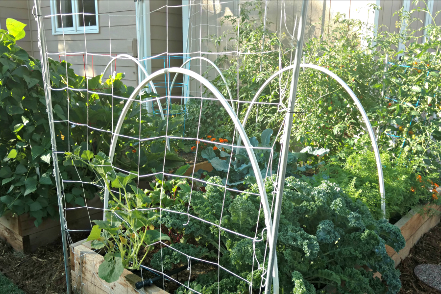 Gardening in raised beds with a loose version of the square foot gardening method